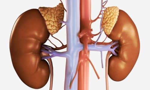 Поскольку вывод вещества из организма осуществляется почками, при их тяжелых заболеваниях перед использованием Элькара нужен совет врача