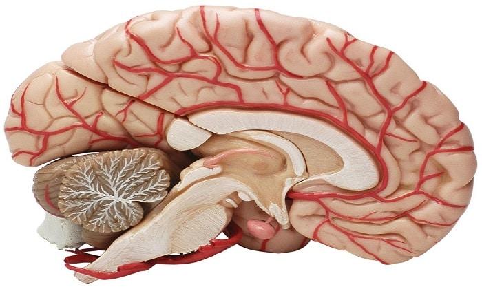 Таблетки Мексиприм назначают при органическом поражении головного мозга