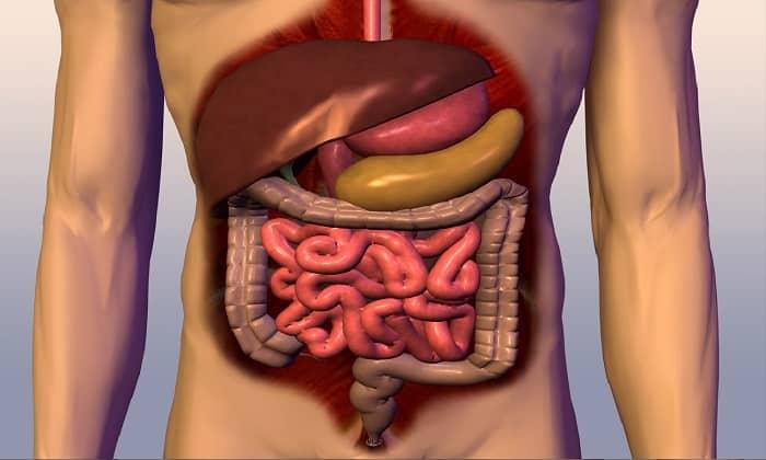 При заболеваниях органов пищеварения назначают Элькар