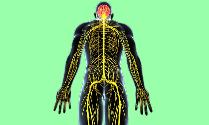Благодаря выраженному антиоксидантному действию средство оказывает положительно влияет на ЦНС