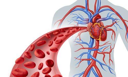 Применение Мексидола приводит к улучшению кровообращения