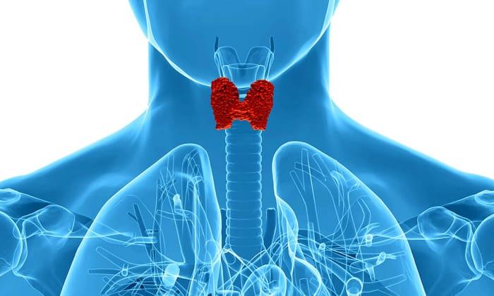 Также при заболеваниях щитовидной железы назначают Л-Карнитин