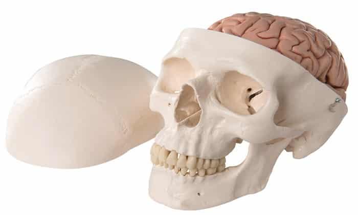 Мексидол показан к применению при черепно-мозговых травмах и их последствиях