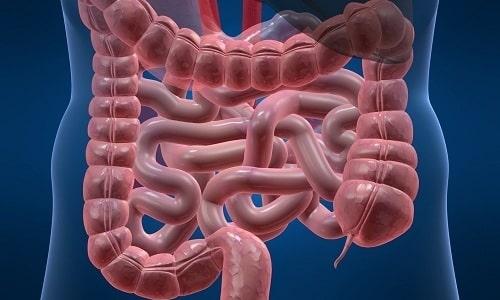 В тонкой кишке компоненты препарата Панкреатин 10000 всасываются более полно