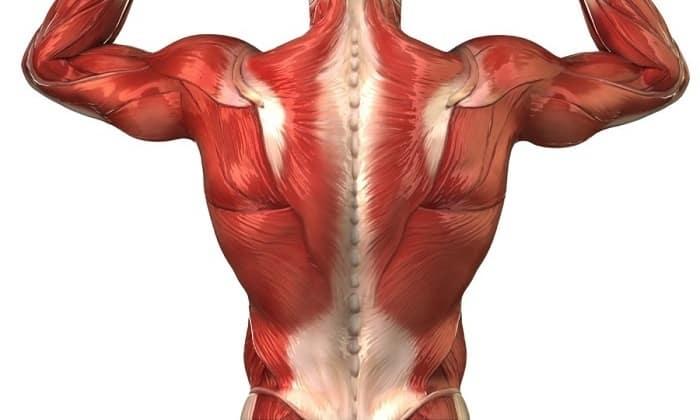 Препарат способствует наращиванию мышечной массы