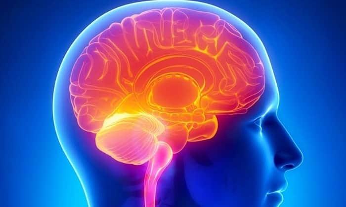 Элькар 20 улучшает работу мозга