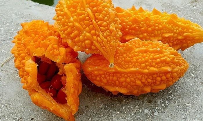 Плоды момордики - снимают явления метеоризма, убирают колики в пищеварительном тракте, тошноту, рвоту, изжогу