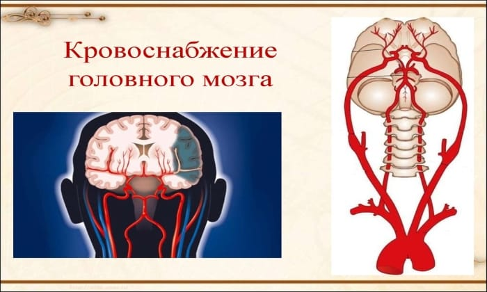 Оба препарата назначаю при острых нарушениях кровообращения головного мозга
