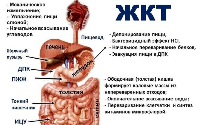 Также лекарство помогает при заболеваниях, которые поражают ЖКТ