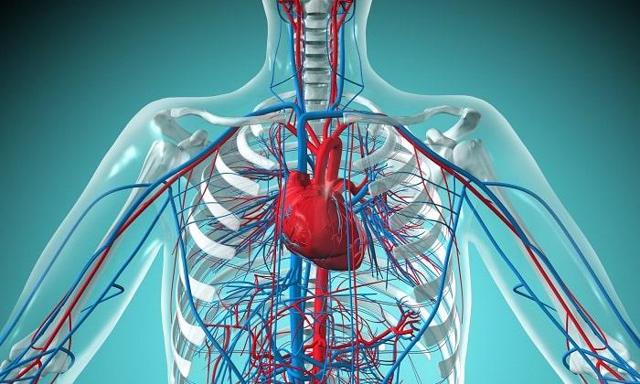 Препарат применяется для лечения заболеваний сердечно-сосудистой системы