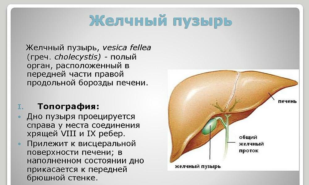 Дюспаталин показан при нарушении работы желчного пузыря