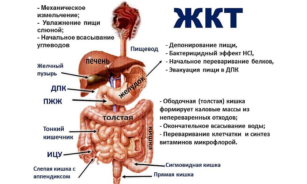 Дюспаталин показан при спазмах органов ЖКТ